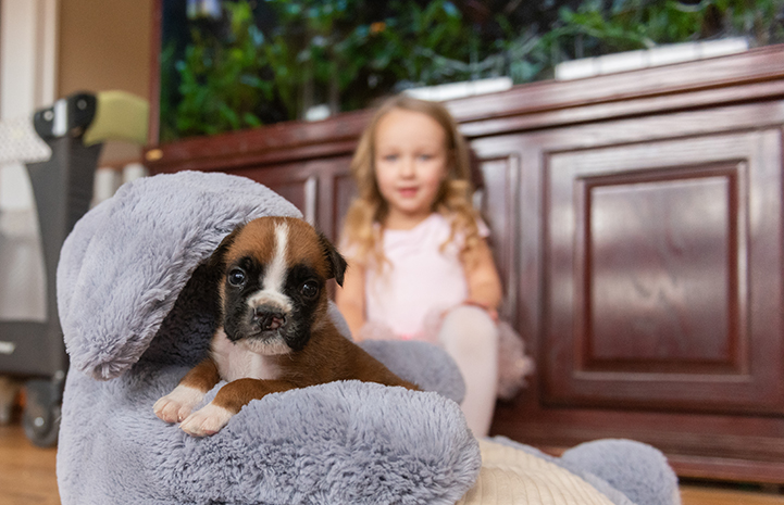 Taco the puppy with a cleft palate on an elephant pillow with a young girl behind him