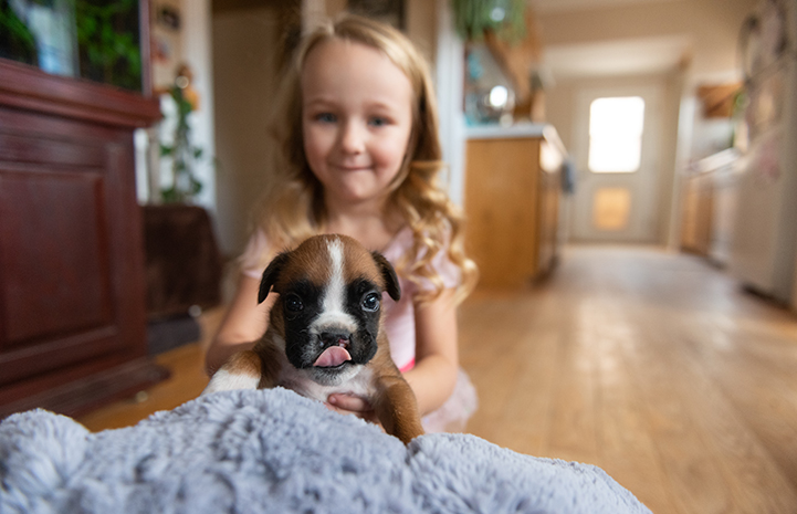 Young girl holding Taco the puppy with a cleft palate who is licking his lips