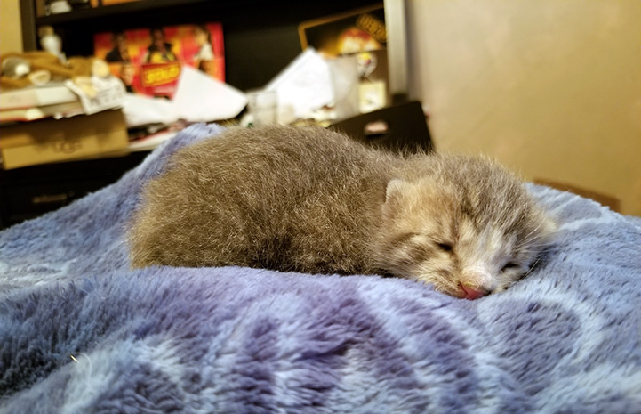 The rescued orphaned kitten who was found behind the school's cafeteria