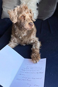 Count Chocula the dog lying on a card sent to him