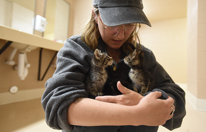Kittens getting their first cuddles figure out that people aren't so scary after all