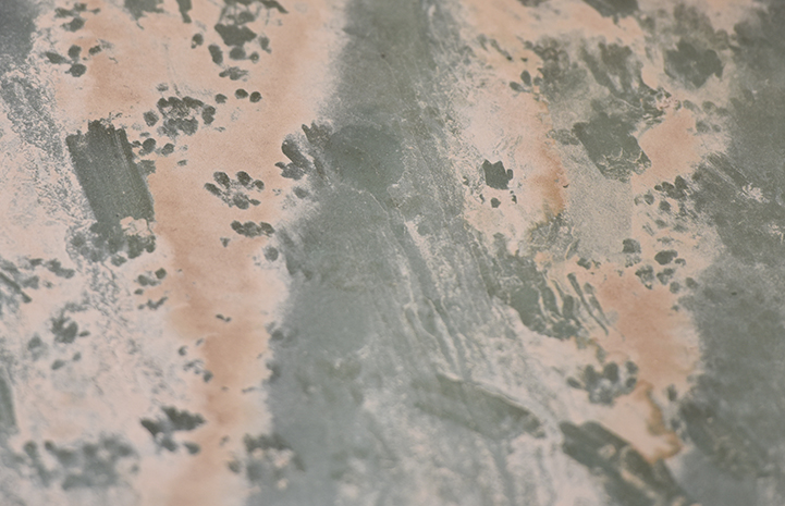 Some dusty cat paw prints in a shed are the only proof they are there