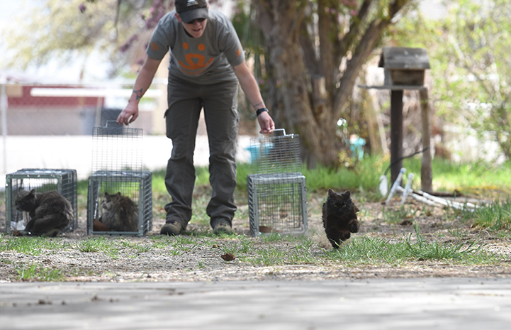 After being spayed or neutered and vaccinated, cats are released at the same location where they were humanely trapped