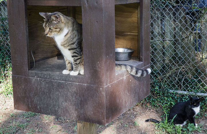 The park staff built feeding stations for the cats that are designed to keep raccoons away