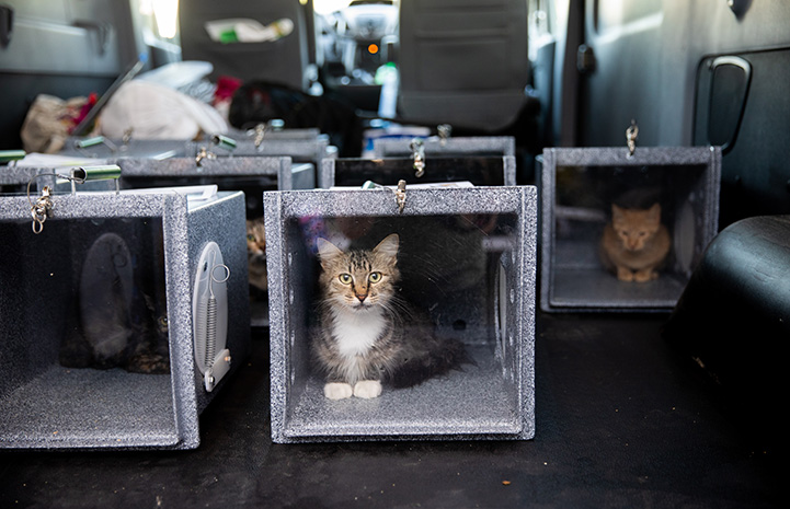 Cats contained in feral boxes for return as part of TNR