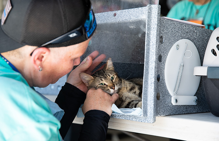 Man pulling up the clear wall of a feral box to pet a brown tabby