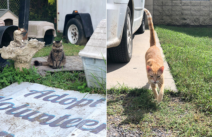 Two photos of Jefferson Parish community cats