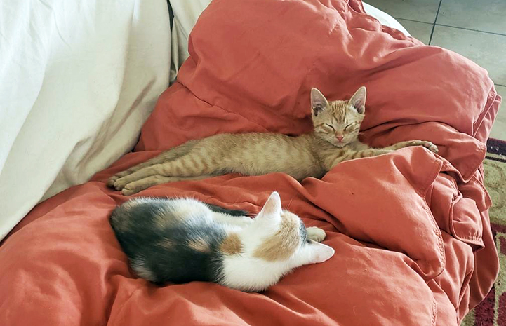 An orange tabby and calico kitten lying on a blanket on a couch