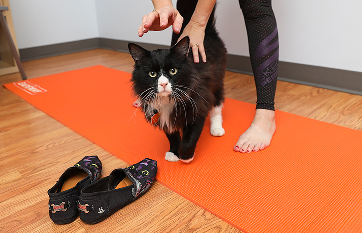 Corky the cat with BOBS for Dogs Skechers shoes