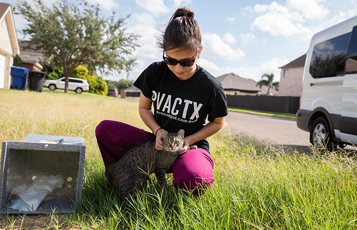 Woman wearing a Palm Valley Animal Society T-shirt posing next to and petting a brown tabby community cat