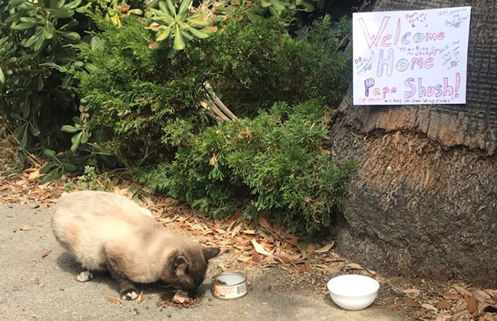 Papa Shush the community cat eating food below a hand-written sign welcoming him back home