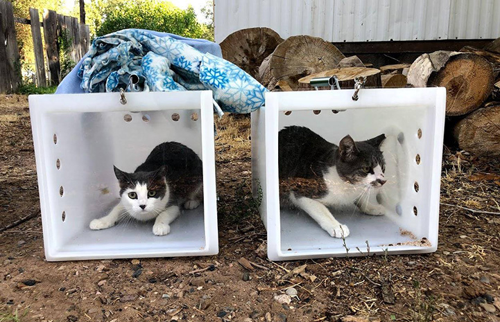Two fixed community cats in boxes ready to be released
