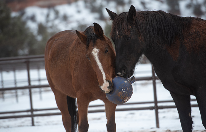 Two horses with their noses together playing with a big ball with a snowy background