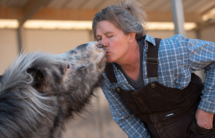 Fury the mini horse kissing a woman wearing overalls
