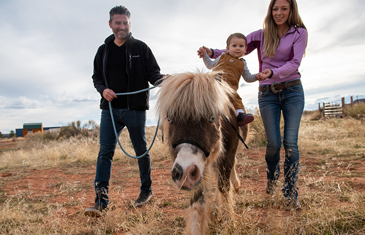Woman holding young girl on the back of Phantom the mini horse while a man walks alongside them holding the horse's lead