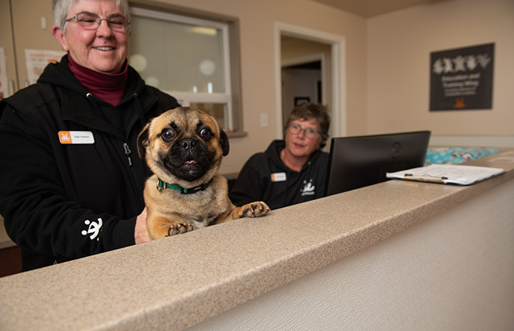 Salvador Dogi the pug with his paws up on a front desk at Dogtown Headquarters with two people behind him