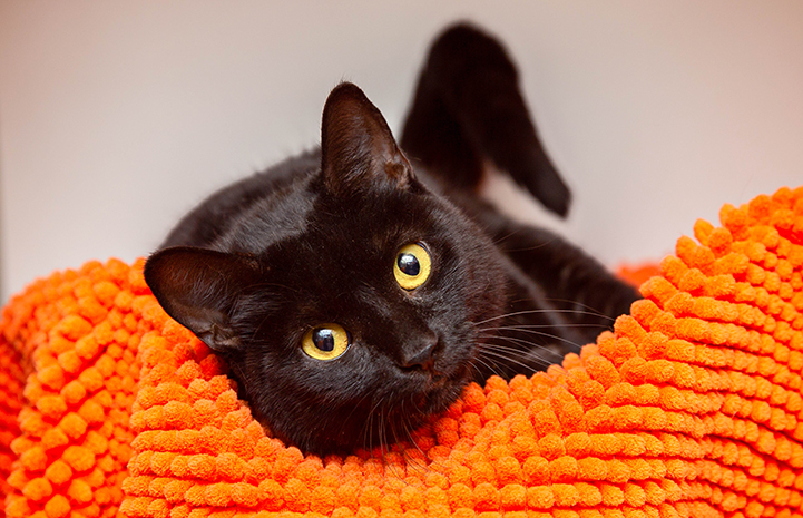 Black cat with yellow eyes lying on a nubby orange blanket