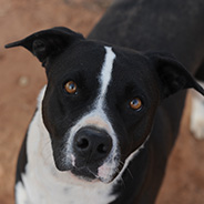 Adopt Danica the dog available for adoption from the Sanctuary