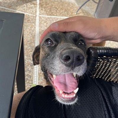 Adopt Darbie the dog available for adoption from Houston