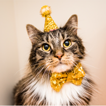 Long haired cat wearing a yellow birthday hat