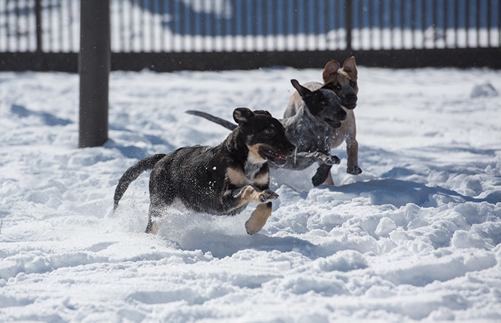 Hike, Fly and Swim the puppies playing in the snow