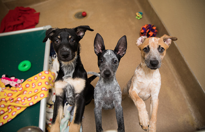 Three puppies, Hike, Fly and Swim, who survived distemper