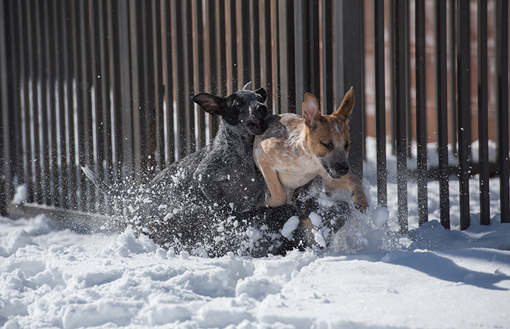 Two puppies playing in the snow