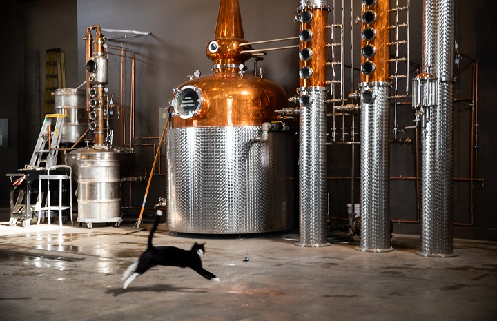 Gimlet the cat running through the SLC distillery