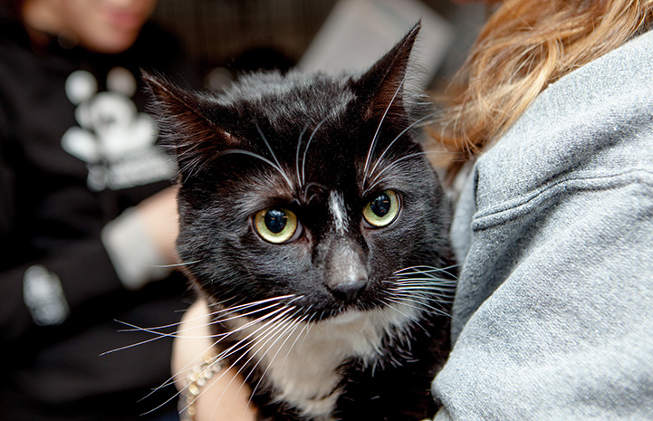 Arizona the black and white cat after being transported from Atlanta to New York City