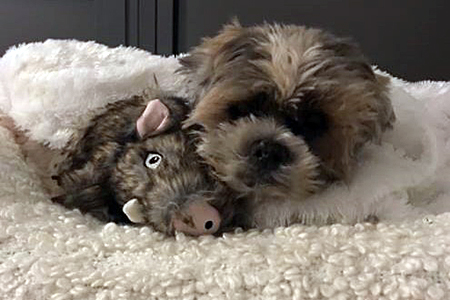 Herman snuggling with a stuffed toy