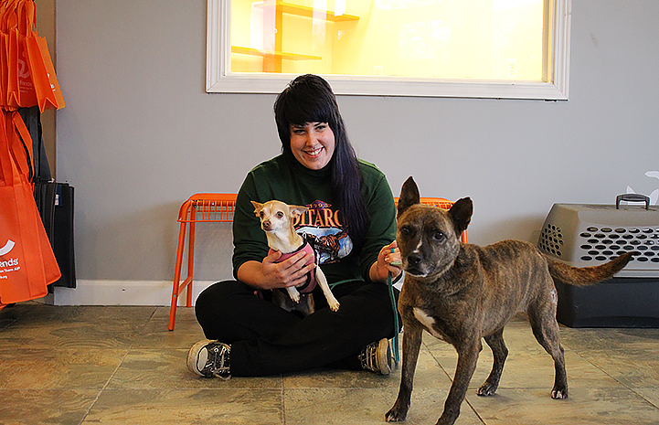 Diamond the brindle dog has been adopted