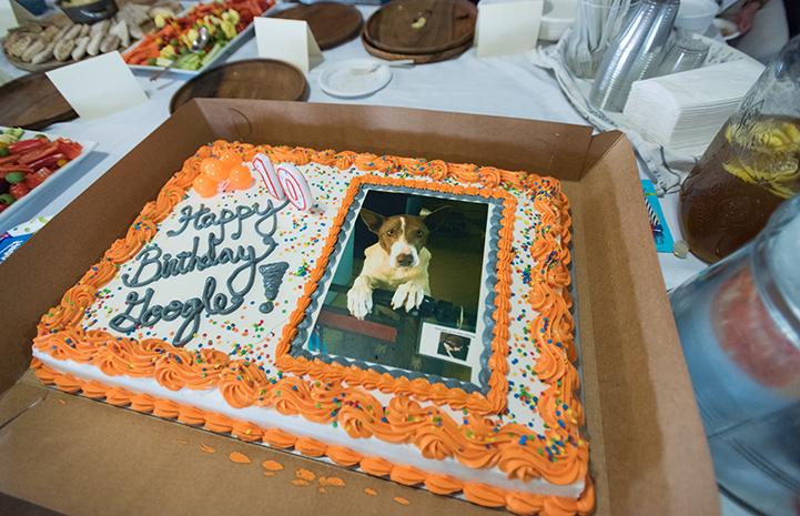 Humans got to enjoy Google's birthday cake