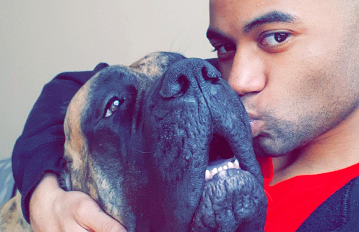 Ryan Hoo giving a kiss to the face of Hazel the Mastiff dog
