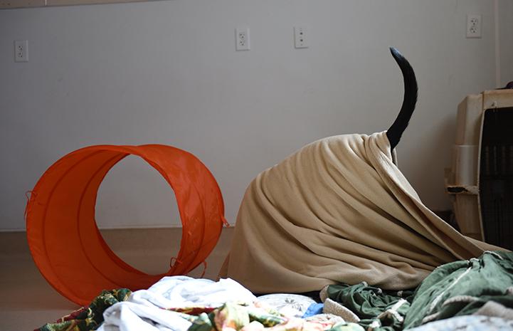 Castiel has plenty of blankets in his room