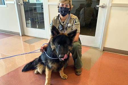 Animal Control Officer Jenae Marquez wearing a mask next to a shepherd on a leash