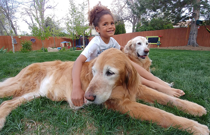 Ava the dog and another dog lying on the grass with a young girl
