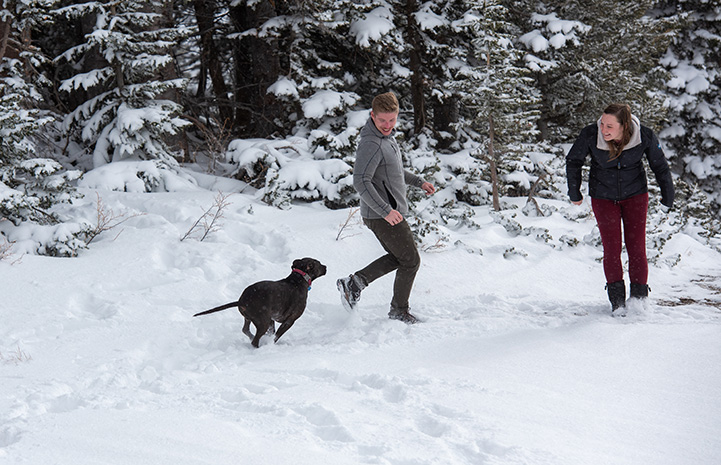 Dakota the dog running and playing in the snow with her two adopters