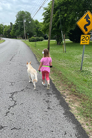 Hanz the German shepherd being walked down the street by a young girl