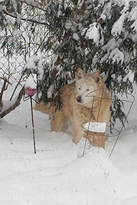 Hayley the dog outside in the snow under a tree