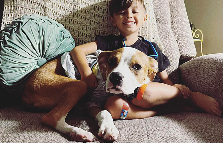 Honey Bee the dog lying on a chair with a smiling child