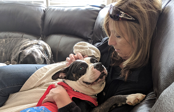 Woman sitting on a couch with a black and white dog lying in her lap as she pets her