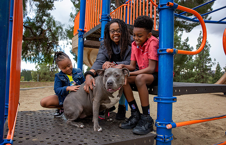 Whole family with Lola the pit bull terrier who they adopted, all together on some colorful playground equipment