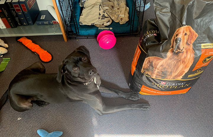 Milo the dog lying next to a large bag of dog food