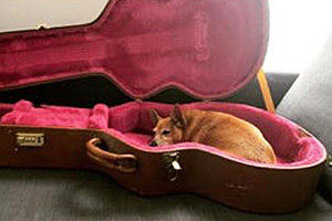Stevie Nicks the dog lying in a guitar case