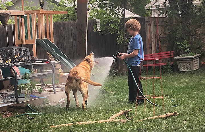 Child spraying a hose while Lance the dog bites at the stream of water