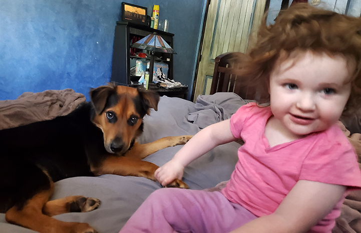 Max the dog lying on a bed with a toddler holding her paw