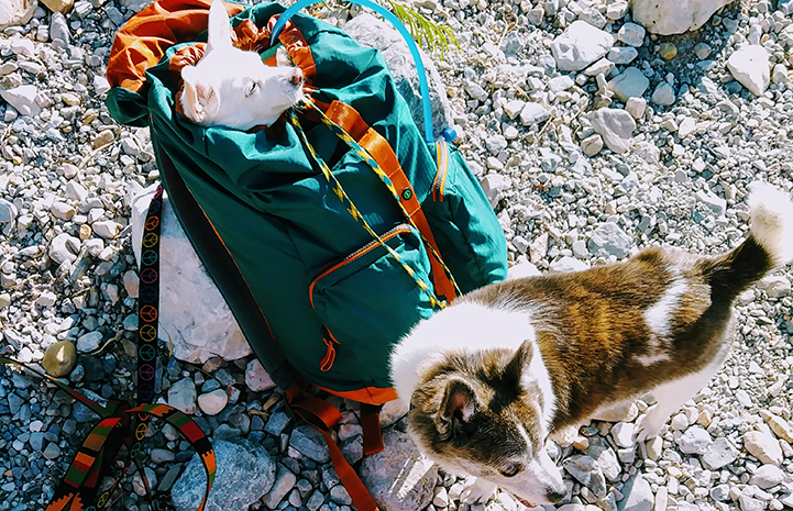 Tom has a hiking buddy, although Rita prefers taking in the fresh air from a backpack