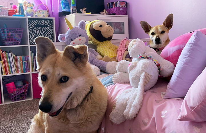 Eliza and Bambi the dogs in a purple room full of stuffed animals