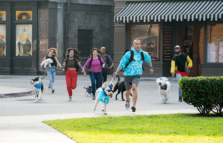 Contestants from The Pack show running with their dogs on leashes