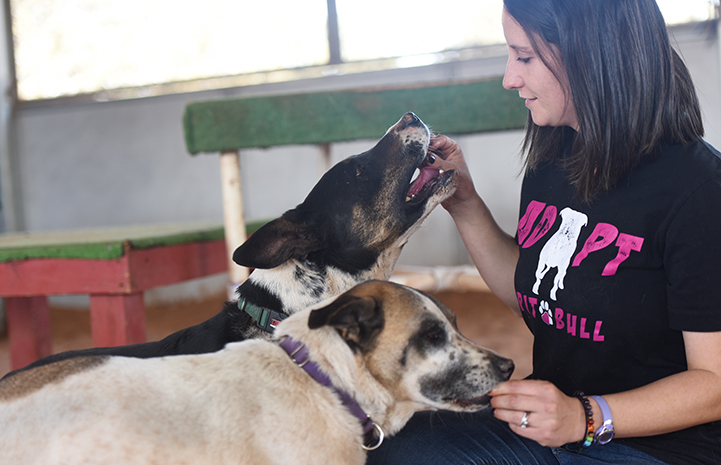 Wyatt and Caroline the dogs get a treat from a woman inside Tara's Run